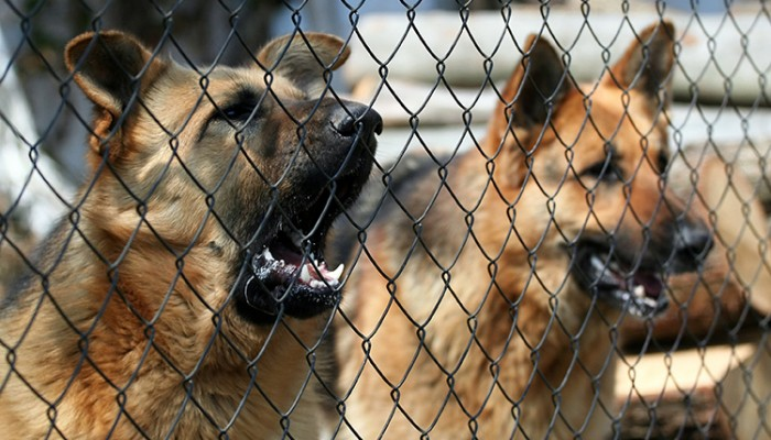 Insurance Coverage for Dog Attacks